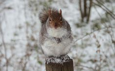 Natalia Davidenko took this photo of a squirrel at Mudchute Farm near Canary Wharf, London