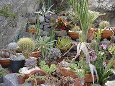 Resultado de imagem para jardins com suculentas