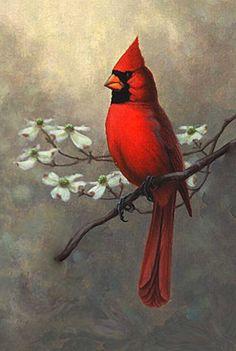 Ideas For Red Bird Tattoo Tat Cardinals Bird Drawings, Animal Drawings, Pretty Birds, Beautiful Birds, Red Bird Tattoos, Feather Tattoos, Cardinal Birds, Bird Silhouette, Watercolor Bird