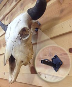Skull Bracket - Made in Wyoming. Skull Bracket was created out of pure necessity to find a better way to hang deer, antelope, buffalo, moose, and elk skulls. We offer three different models to choose from depending on the type of skull you are hanging. Deer Skull Art, Cow Skull Decor, Deer Skulls, Animal Skulls, Painted Cow Skulls, Skulls For Sale, Antler Art, Antler Jewelry, Buffalo Skull