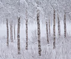 Jon Martin from the United Kingdom was the winner of the 2015 snow and Ice award...