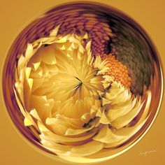 Amazing Circle - Straw Flowers.  Copyright Nancy Kirkpatrick Photography