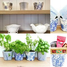 CC Interior Blue & White Planters with Gourmet Treats - a unique gift idea for a mother or daughter. http://www.giftloft.co.nz/collections/gifts-for-living/products/cc-interiors-blue-white-planter-with-gourmet-gluten-free-treats