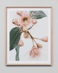 Spring homewares: Fresh blooms star in our fave finds! - The Interiors Addict Framed Artwork, Framed Prints, Art Prints, Wall Art, Botanical Prints, Floral Prints, Oz Design Furniture, Flower Frame, Watercolor Print