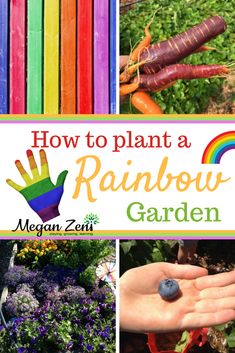 How to Plant a Rainbow Garden Planting A Rainbow, Rainbow Garden, Rainbow Fruit, Rainbow Theme, Orange Plant, Yellow Plants, Blue Plants, Rainbow Activities, Rainbow Crafts