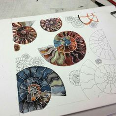 Sam Cannon Art - Watercolor Nautilus Seashells - pic for inspiration Silk Painting, Painting & Drawing, Shell Drawing, Beach Drawing, Watercolor Flowers, Watercolor Paintings, Watercolours, Doodle Drawing, Sam Cannon