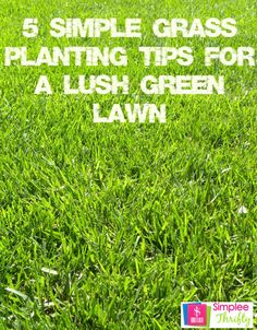 5 simple grass planting tips for a lush green lawn