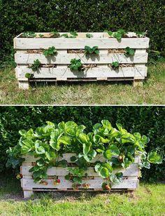 jardiniere palette bois fraises amenagement petit jardin potager exterieur