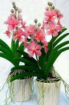 potted orchids - My site Strange Flowers, Exotic Flowers, Amazing Flowers, Beautiful Flowers, Nylon Flowers, Clay Flowers, Flowers Nature, Orchids Garden, Orchid Plants
