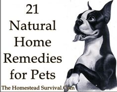 The Homestead Survival | 21 Natural Home Remedies for Pets | http://thehomesteadsurvival.com