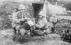 GERMAN ARMY WESTERN FRONT (Q 23700)   A despatch dog brings food to two German soldiers in an advanced trench, somewhere on the Western Front. The dog is wearing a special harness on its back which can hold mess tins. In the background, a third soldier can be seen pointing his rifle over the top of the trench.