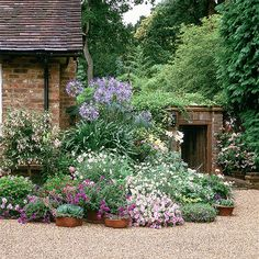 Garden Design Country garden with billowing border - Echeveria, ricinus and lilies soften a mellow brick wall, while a gravel path adds to the relaxed feel. - Combine pretty pot plants and tall bushes and make an impact on a gravelled pathway. Gravel Garden, Garden Pots, Garden Landscaping, Gravel Path, Landscaping Ideas, Gravel Front Garden Ideas, Country Garden Ideas, Potted Garden, Country Landscaping