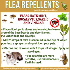 "☛ YOU asked, we answer.  Here are some good flea repellents:  MAKE SURE YOU USE ""EDIBLE"" DIATOMACEOUS EARTH.  FOR ALL THE DETAILS:  http://www.stepintomygreenworld.com/healthyliving/around-the-home/flea-repellent/  ✒ Share 
