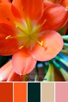 paletas de colores canva