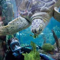 Save on premium admission to the top 5 Chicago attractions with CityPASS®, including the Shedd Aquarium with priority entrance and Experience. Chicago Vacation, Chicago Travel, Travel Usa, Chicago Trip, Chicago Pictures, Animal Classification, Shedd Aquarium, Visit Chicago, City Pass