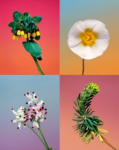 botanical photography by Erwan Frotin Artistic Photography, Art Photography, Flannel Flower, Jr Art, Artists And Models, All Flowers, Nature Animals, Photo Look, Flower Photos