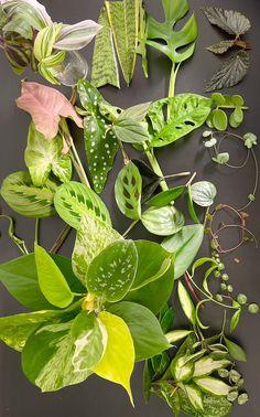 Mystery Box Plant Cuttings | Etsy Planting Plants, Plant Cuttings, Mystery Box, Plant Leaves, Etsy