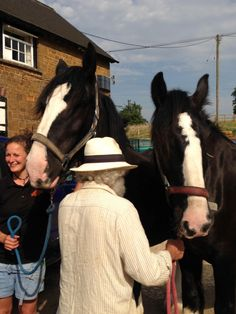 Two new shire horses will be hauling Cotswold brewery's beer around local pubs
