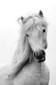 Cute as can be horse face, what sweet eyes and pretty mane.
