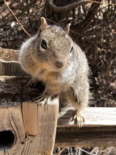 Super friendly rock squirrel at Zion National Park posing for his school pictures https://ift.tt/2JnxdAH #Puppy #Puppies #Pics #Dog #Adopt #Pets #Animals
