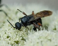 Japanese Beetle Control - Better Homes and Gardens