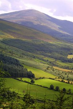 The green, velvet beauty of Mount Leinster, County Carlow