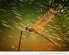 cool ass dragonfly - Αναζήτηση Google