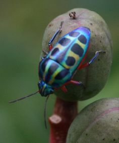 colorful bugs - Google Search