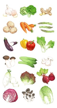 Watercolor Food, Watercolor Illustration, Watercolor Paintings, Fruit And Veg, Fruits And Vegetables, Vegetable Illustration, Food Drawing, Food Illustrations, Drawing Techniques