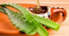 "Aloe vera gel has been called as ""Planet of life"" and ""Miracle plant"". Aloe vera gel has been used as herbal. Como Tomar Aloe Vera, Home Remedies For Pimples, Natural Kitchen, Nutrition, Asthma, Natural Medicine, Kraut, Natural Remedies, Natural Treatments"