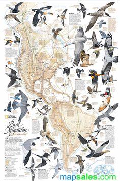 National Geographic Maps, Flight Patterns, Common Birds, Bird Migration, Migratory Birds, Wall Maps, Mundo Animal, Colorful Birds, Fauna