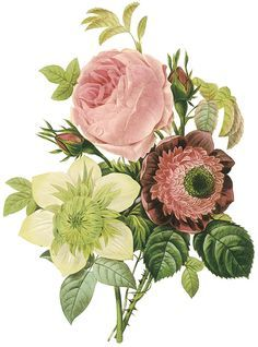 tiel and burgandy antique florals drawings - Google Search