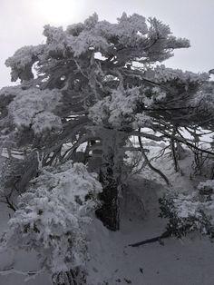 Mt.Halla, Jeju Island, Korea.