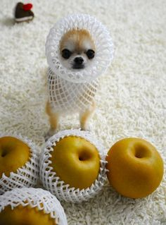 With the right outfit funny cute animals dogs adorable puppy animal pets funny quotes funny animals Baby Animals, Funny Animals, Cute Animals, Wild Animals, Cute Puppies, Cute Dogs, Tiny Puppies, Love My Dog, Chihuahua Love