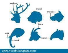 Animal body