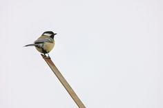 Charles Darwin, Paul Mccartney, Animal Kingdom, Wordpress, Creatures, Birds, Contemporary, Blog, Animals