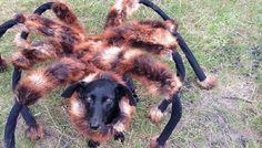 Mutáns pók kutya-ez haláli:D