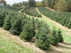Sandy Hollar Farms - Christmas Tree Farm - This a relatively new family tradition for us. We got our first tree from here 3 years and will probably never buy a tree off a lot again. Hay ride, fire pit, hot cider, cutting down the perfect tree on your own... you can't really go wrong with this as a holiday outing.