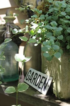Simple little touches.... #LittleGardenDesign