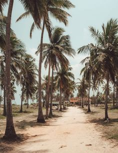 7 Awesome Things To Do Trincomalee, Sri Lanka