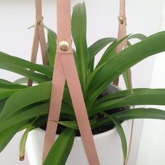 This aint your mothers macrame. Our plant hangers are made from straps of recycled leather, riveted together with brass hardware, creating a flexible, environmentally friendly and sleek design. :: APPROXIMATE SIZE :: Due to the recycled nature of our leather, the length varies