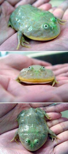 Flat n' round frog