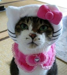 Hello Kitty is not amused. Me. Ow.
