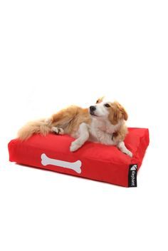 Small Dog beds, where better for man's best friend to take the weight off than in the arms of an Elephant? Small Elephant, Dog Beds For Small Dogs, Beds For Sale, Danish Design, Pet Shop, Baby Care, Snuggles, Memory Foam, Your Dog