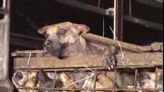 Petition · President of Vietnam, Trương Tấn Sang and Vice President Nguyễn Thị Doan. Stop Catholics in Vietnam of KILLINGS and TORTURING dogs for Christmas NOW (2015)! The World is watching You!!! · Change.org