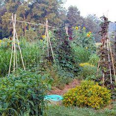 Permaculture! #verticalfarming