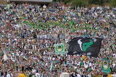 Sporting Clube de Portugal                                                                                                                                                                                 Mais