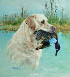 Opening Day - Yellow Labrador & Green Winged Teal by Jim Killen