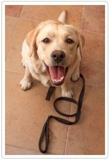 Words of Wisdom: #Dog Training Vocabulary