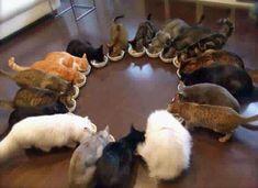 20 Cats eating dinner
